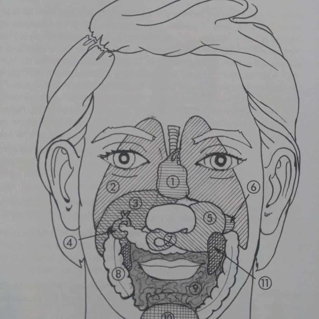 Schéma des zones réflexes du visage
